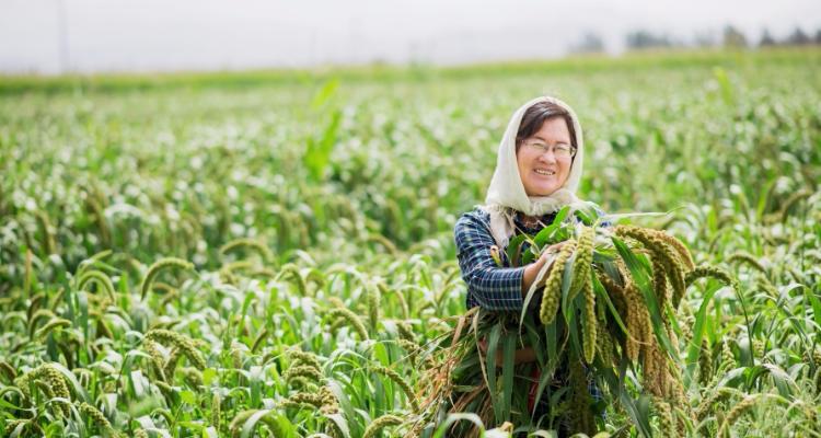 任小米节水助农